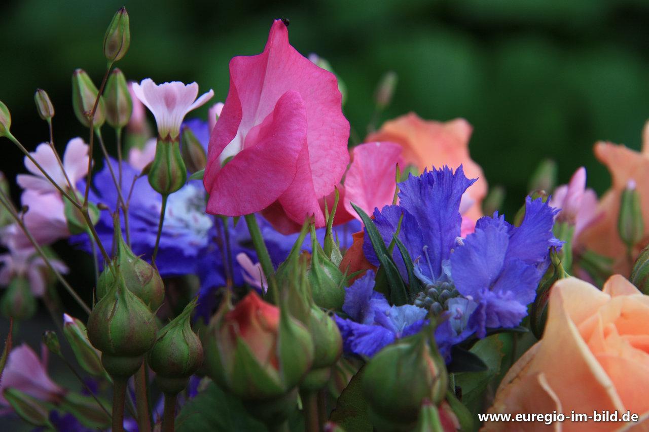 Bunter Blumenstrauss Fur Den Monat Juni Euregio Im Bild