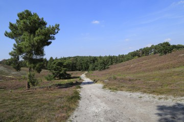In der Brunssumerheide