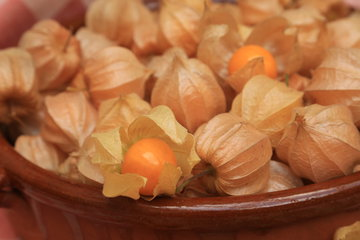 Physalis oder Andenbeere