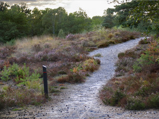 Wanderweg in der Brunssumer Heide